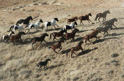 herd_running.jpg