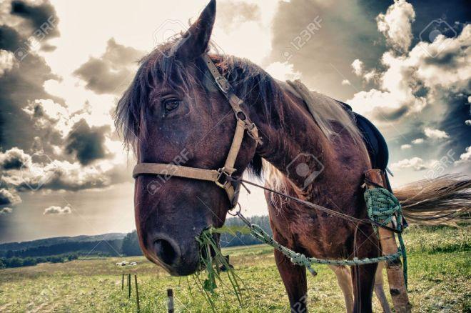 11172760-sad-horse.jpg