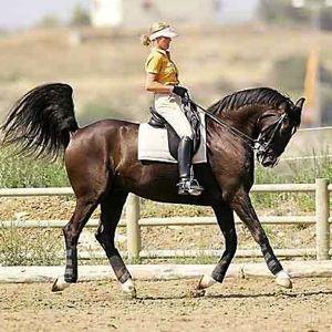 horse_conformation_bad_riding.jpg