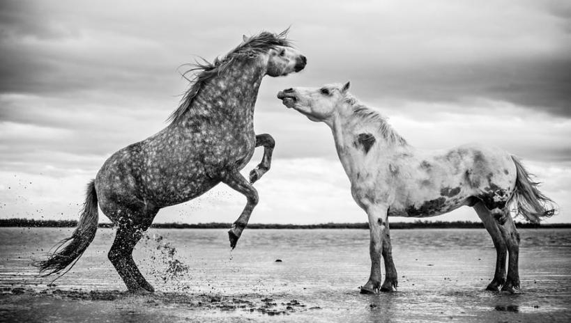 rearing-stallion-i-tim-booth.jpg