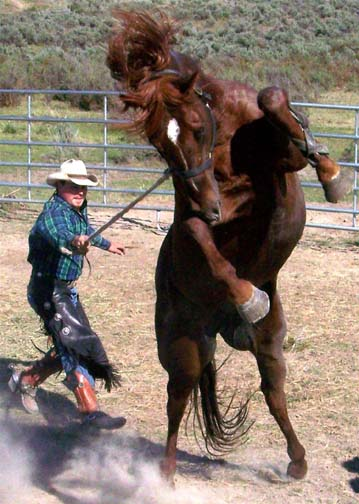 rearing_stallion_by_valarian_warrior.jpg